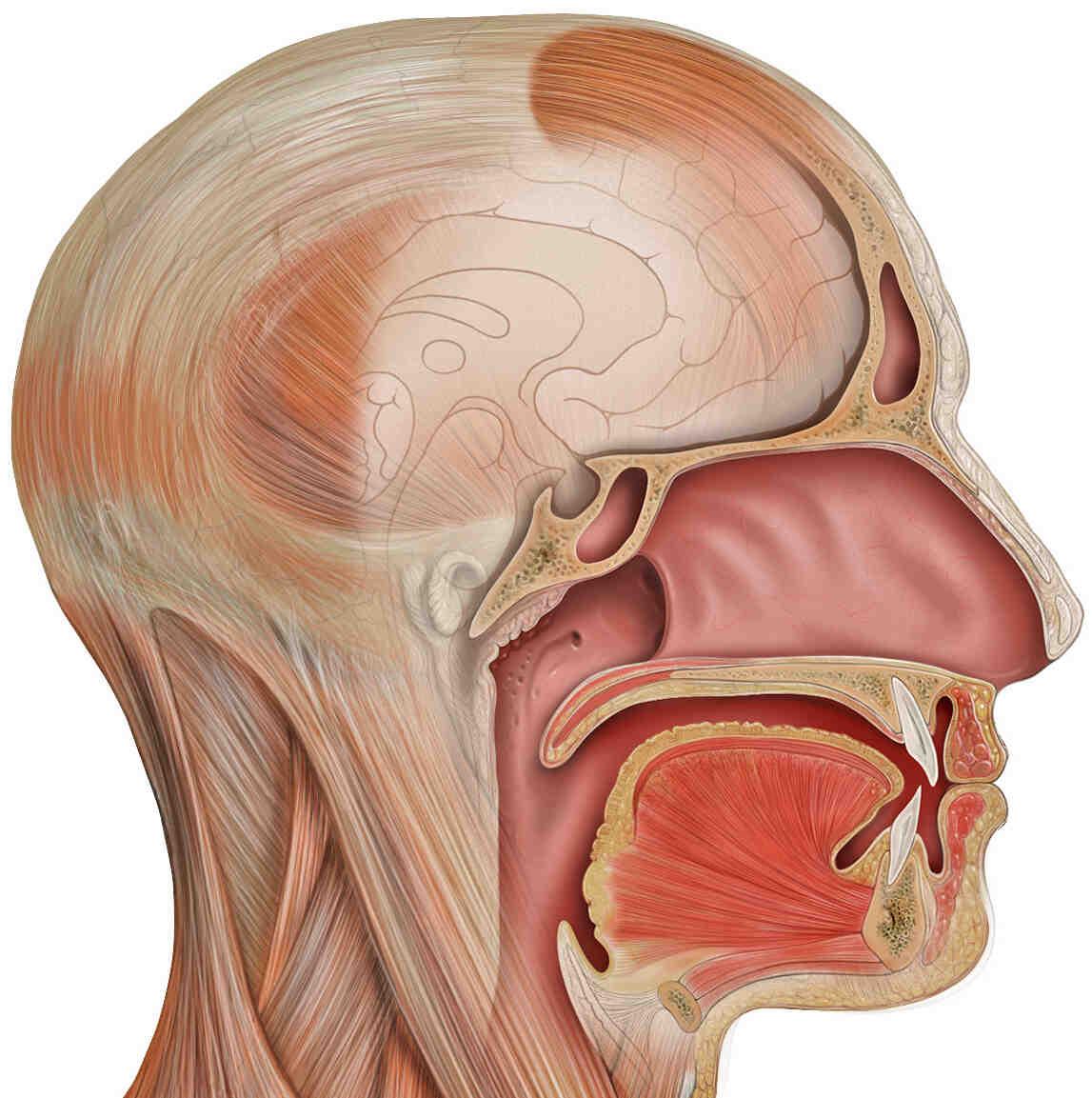 Comment guérir la mauvaise haleine ?